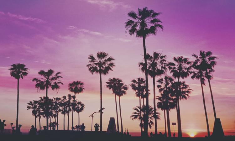 Palmeras en una playa de Miami