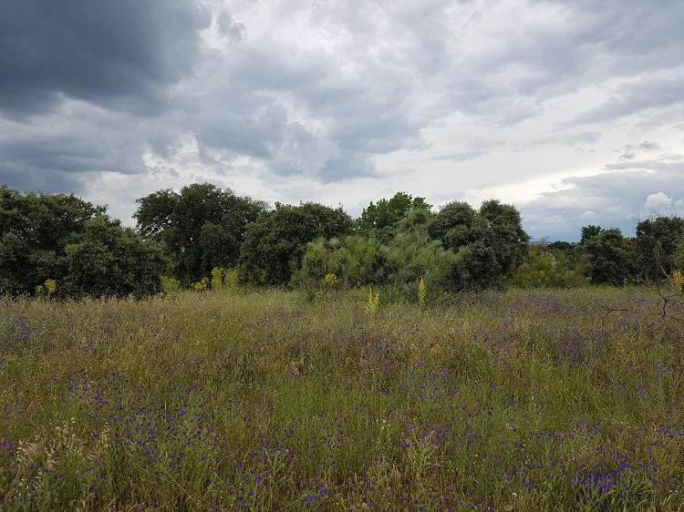 El campus de Villaviciosa de Odón está rodeado de naturaleza.