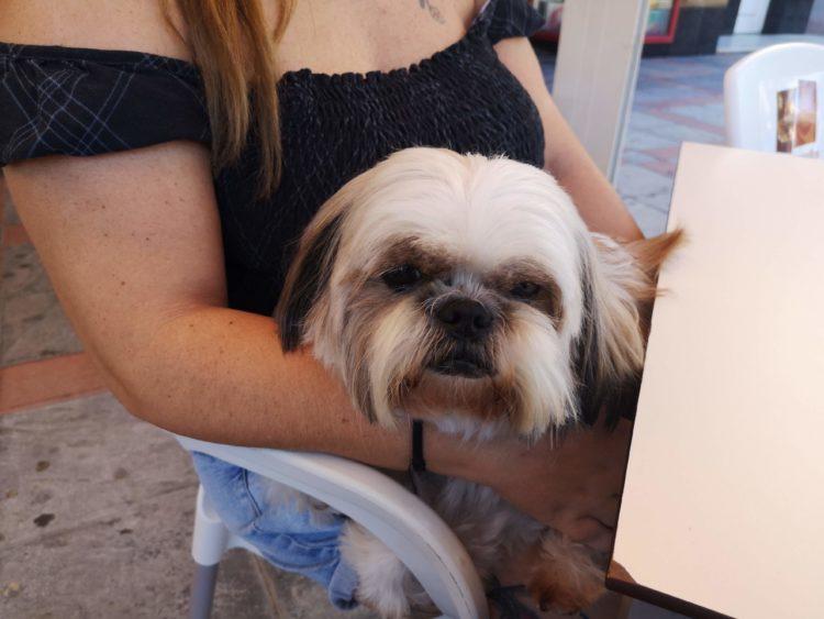 Cómo trabajar como psicólogo canino y felino