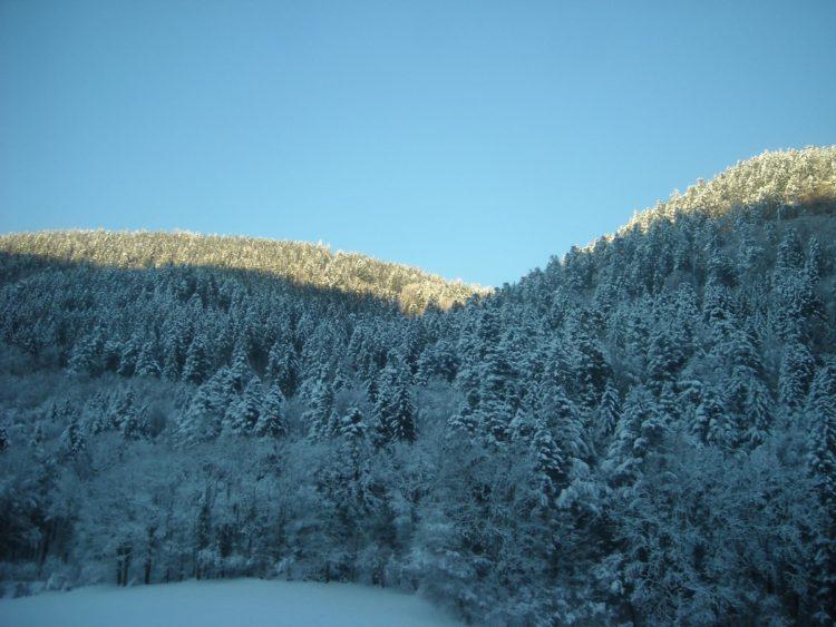 Guarda forestal