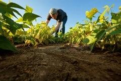 Cómo ser agricultor. Trabajo, sueldo y cursos
