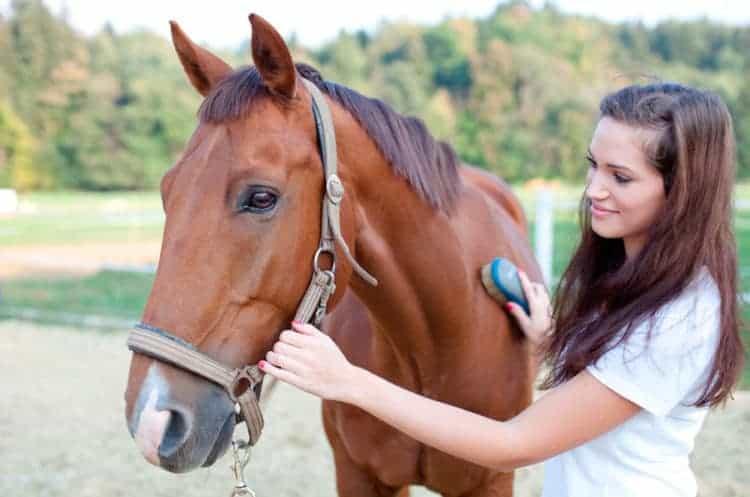 Cómo ser monitor de equitación. Requisitos, sueldo y cursos