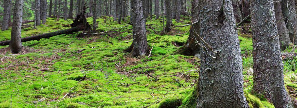FP de Técnico Superior en Gestión Forestal y del Medio Natural