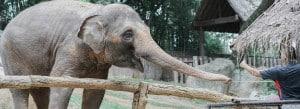 curso de cuidador de animales de zoológico