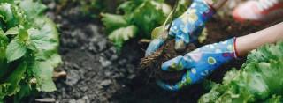 Curso de Jardinería y Agricultura Ecológica