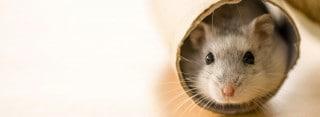 Curso de Dependiente de Tiendas de Animales