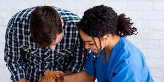 ¿Dónde estudiar enfermería veterinaria?