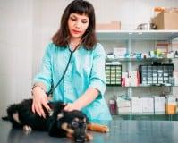 Máster de veterinaria en España, ¿qué opciones hay?
