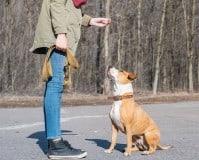 Conoce el sueldo de un adiestrador canino