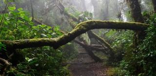 Oposiciones de Guarda Forestal País Vasco
