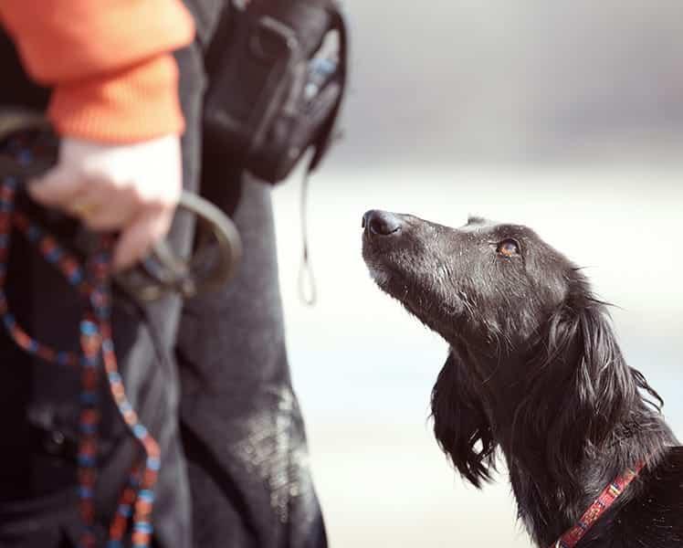 Salidas laborales de un Adiestrador Canino