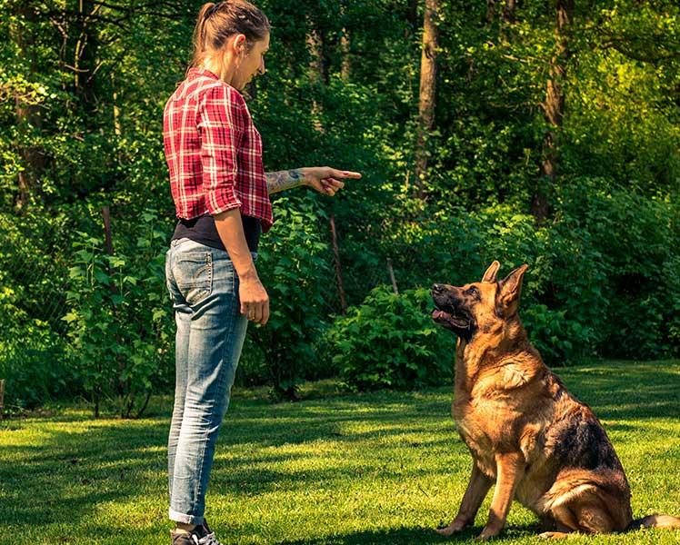 Sueldo de un Adiestrador Canino